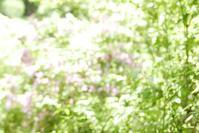 ハイキーであそんだ花フェスタ記念公園 2 - mypotteaセンチメンタルな日々  with photos 2