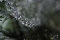 梅雨の日 - daily scraps