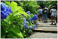 明月院ブルーとハート紫陽花 -  one's  heart