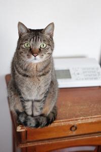 ゴロゴロ猫  - きょうだい猫と仲良し暮らし