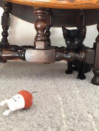 黒猫ちゃんと梅酒 - こもトク ~healing cats~