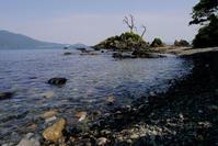 タイドプールのアゴハゼ - Beachcomber's Logbook