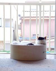 おねつ - ぶつぶつ独り言2(うちの猫ら2017)