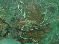 2011.10 伊豆山 The 1st Dive - ランゲルハンス島の海