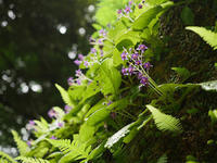 鎌倉の花など - 風任せ自由人