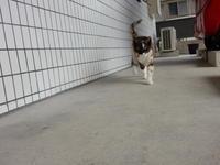 あたしの名前はさつきちゃん&カゴ猫栗ちゃん - 愛犬家の猫日記