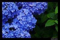 Meigestuin Blue - Next Colors