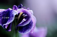 明日は父の日 - 花々の記憶