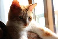 見張り番 - ぎんネコ☆はうす