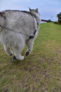 ウィンウィンの関係で♪ (^o^) - 犬連れへんろ*二人と一匹のはなし*