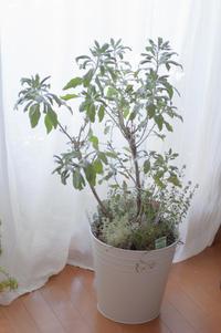 オーダー品:ハーブの寄せ植え - le jardinet
