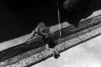 沼垂で猫遊び - Yoshi-A の写真の楽しみ