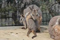 シマオ一家~袋から出てきた三男坊 - 続々・動物園ありマス。