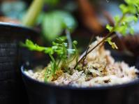 ヤクシマホウビシダ #2 - Blog: Living Tropically