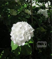 植物的生活811 - Atelier Botanique COCA-Z