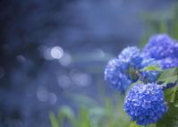 青い水辺 - ほほえみ
