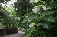 8年ぶりに山梨県・高川山に その6 - 季節(いま)を求めて