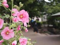 足立区の街散歩 242 - 一場の写真 / 足立区リフォーム館・頑張る会社ブログ