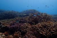 17.6.14 雷雨をヨけて! - 沖縄本島 島んちゅガイドの『ダイビング日誌』