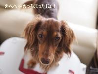 17年6月14日 桃ちゃんの反撃!(笑) - 旅行犬 さくら 桃子 あんず 日記