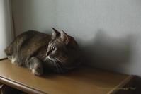 猫がいる暮らし - 7 - - *Any*