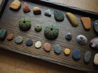【海で拾った石】ウニの殻と貝と石その2 - azukki的.