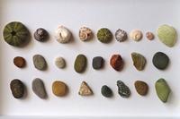 【海で拾った石】ウニの殻と貝と石 - azukki的.
