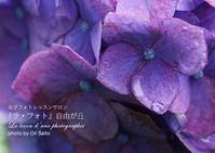 """お借りしたZEISS Batis 1.8/85だったので雨に濡れないように頑張ったけど、ホントは防滴らしい。雨に濡れた紫陽花 - 東京女子フォトレッスンサロン『ラ・フォト自由が丘』の""""恋するカメラ"""""""