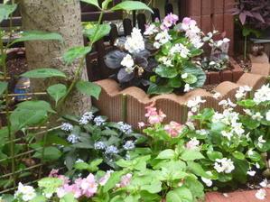 初夏のお花畑 - はーれー君の陶芸etc