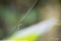 蜘蛛の糸 ・・・ - ぶらりカメラウォッチ・・