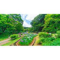 明治神宮御苑 花菖蒲 - 12か月・写真は楽しいですョ!