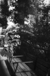 紫陽花の季節 - jinsnap (weblog on a snap shot)