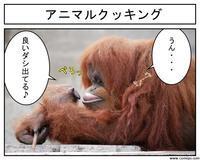 動物実写1コマ漫画、オランウータンのお料理編 - 思い出に変わる日々