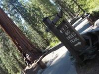 お一人様旅行その5@Sequoia National Park - 気ままなLAヴィンテージ生活