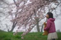 ★「優秀賞」受賞〔2017紫雲出山の桜フォトコンテスト〕しました。 - 一写入魂