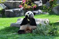 2017年5月 白浜パンダ見隊2 その7 - ハープの徒然草