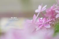 紫陽花物語 Vol.01 - 君に届け