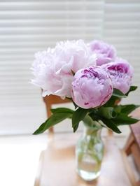 芍薬 - la fleur ラ・フルール