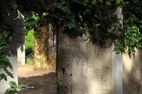 木漏れ日の廃墟 - ある日の足跡