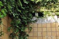 木漏れ日の廃墟2 - ある日の足跡