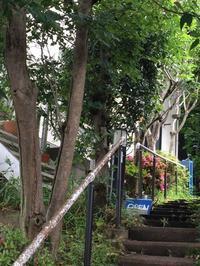 朝  散歩。 - MakikoJoy 上北沢のアロマセラピールームあつあつ便り