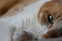 また、やっちまった - ぎんネコ☆はうす