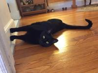 壁を歩く猫 - にゃんこと暮らす・アメリカ・アパート