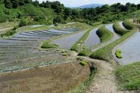 初夏~ 千早の棚田 ① - katsuのヘタッピ風景
