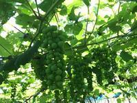 交野市の畑 - WineShop FUJIMARU