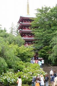 「あじさい寺」とも呼ばれる境内には、1万株の紫陽花が見頃を迎えました(千葉県、松戸市、本土寺) - 旅プラスの日記