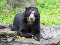 6月15日(木) 17時間 - ほのぼの動物写真日記