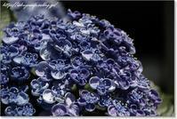青紫 - 石屋の女房