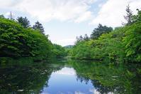 軽井沢観光人気ナンバーワンの雲場池は新緑が最高に美しいです! - きれいの瞬間~写真で伝えるstory~