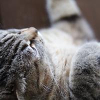 にゃんこ劇場「おやすみ💤ななちゃん!」 - ゆきなそう  猫とガーデニングの日記